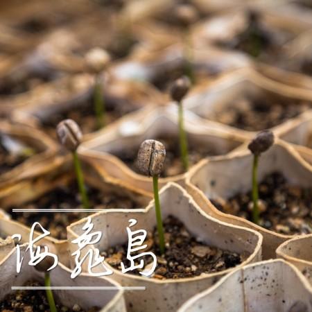 海龜島(水洗有機G1)熟豆225G