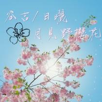 谷吉/月見野櫻花(日曬小珍珠G1)咖啡豆225G